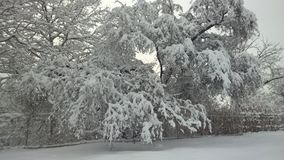 好的看法透视在树的雪 图库摄影