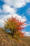 好的秋天结构树 库存照片