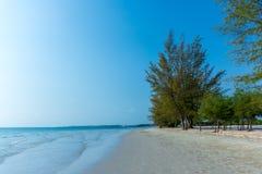 好的空的树排行了与风平浪静的海滩 图库摄影