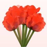 好的红色春天花束 库存图片
