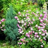 好的花在庭院里盛夏,在一个晴天 免版税库存照片