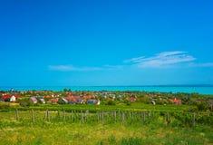 好的葡萄园在匈牙利 库存图片