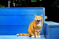 好的观点的在一条蓝色长凳的一只红色猫 免版税图库摄影