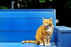 好的观点的在一条蓝色长凳的一只红色猫 库存照片