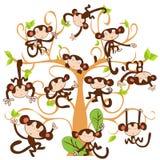 好的逗人喜爱的猴子 免版税图库摄影