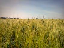 好的麦子农场 免版税图库摄影