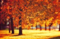 好的晴朗的天气的-秋天风景秋天公园 免版税图库摄影
