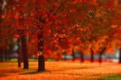 好的晴朗的天气的-秋天风景秋天公园 免版税库存照片