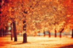 好的晴朗的天气的-秋天风景秋天公园 库存图片