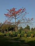 好的结构树 免版税库存照片