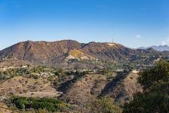 好莱坞标志看法从好莱坞Hills的 日观察的猫坐温暖晴朗的结构树 在蓝天的美丽的云彩 库存照片