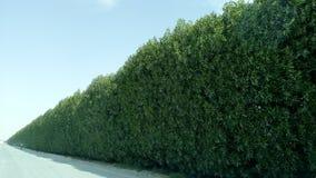 好绿色墙壁 库存照片