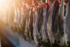 如何对鲜鱼关心长期保持 图库摄影