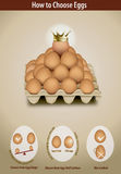 如何选择鸡蛋 库存图片