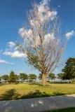 如在湖中看到卡特衣阿华和奥马哈内布拉斯加镇的死的树  图库摄影