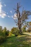 如在湖中看到卡特衣阿华和奥马哈内布拉斯加镇的死的树  库存照片