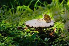 如果蘑菇戴了帽子 图库摄影