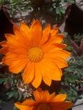 如果送花,机会的you're是您希望发亮一person's天 库存照片