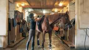 妇女一匹马为乘驾做准备 运动员在骑她的马前移动马鞍 股票录像