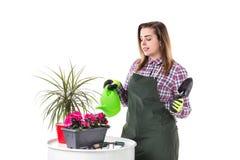妇女专业花匠或卖花人拿着花的围裙的 免版税库存照片