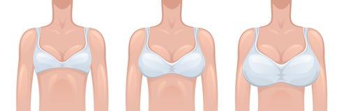 妇女乳房剖面图. 库存例证 - 图片: 39457628
