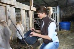 妇女交配动物者哺养的牲口在谷仓 免版税库存图片
