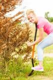 妇女从后院去除树,开掘土壤与铁锹 免版税库存图片