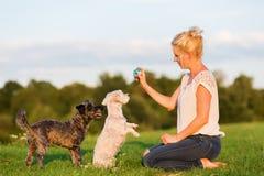 妇女使用与两条狗杂种狗户外 免版税库存图片