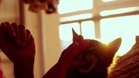 妇女使用与在日落背景的小的小猫在慢动作的床上 幸福 1920x1080 股票视频