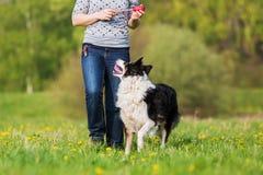 妇女使用与在草甸的一只博德牧羊犬 免版税图库摄影