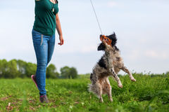 妇女使用与她的与调情的人工具的狗 库存照片