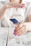 妇女保护在酒杯的鱼,生态,净水,概念照片 免版税库存图片