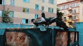 妇女假发的在太阳镜,蓝色帽子人吃在大型垃圾桶的食物 乌鸦 蠢事 股票视频