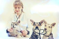 妇女兽医和小狗 免版税图库摄影