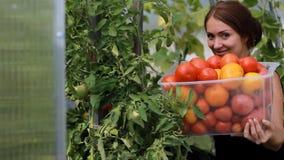 妇女农夫自温室收获菜 生长蕃茄庄稼  股票视频