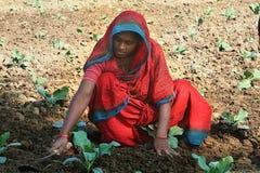 妇女农夫 免版税库存照片