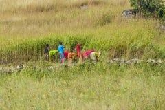 妇女切了草甸和玉米 库存照片