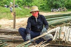 妇女切口竹子 免版税图库摄影