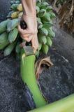 妇女切口香蕉 库存照片
