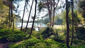 妇女单独湖边树植被 库存照片