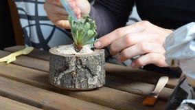 妇女卖花人倾吐装饰石头对一张木花盆 关闭u 股票视频