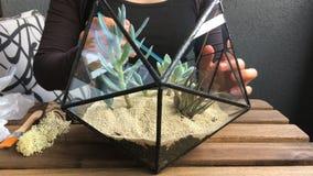 妇女卖花人用与多汁植物的石头玻璃florarium装饰 特写镜头 正面图 股票录像