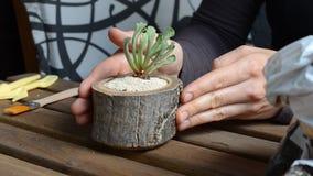 妇女卖花人转动木花盆与多汁植物 特写镜头 角度图 股票视频