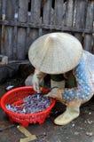 妇女卖草料鱼在荣市Luong口岸的一个地方海鲜市场上 图库摄影