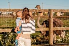妇女和孩子看驼鸟的农场的 免版税图库摄影