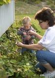 妇女和小孩挑选浆果 免版税库存照片