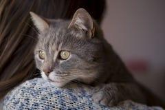 妇女和猫 免版税库存照片