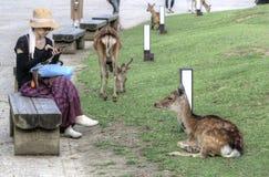 妇女和Sika鹿在奈良,日本 免版税库存照片