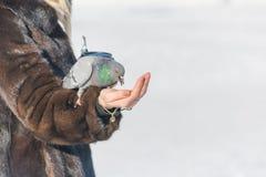 妇女喂养从她的手的鸽子 饲料鸟在冬天用手 免版税库存照片