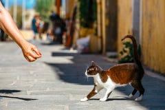妇女喂养在街道上的一只无家可归的猫 免版税库存图片